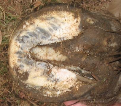 Antérieur gauche et postérieur gauche, février 2006 (3 mois de